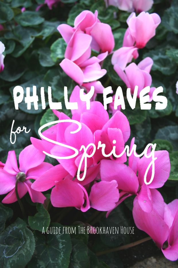 Philly Faves: a local's favorite spots in the Philadelphia area